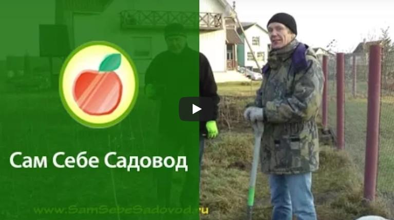 Как посадить дерево (саженец)